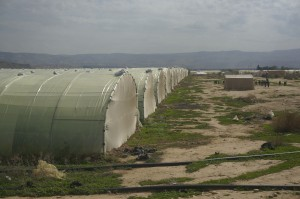 Di dalam khemah kebun2 sayur orang Jordan sempadan menuju ke Palestin.